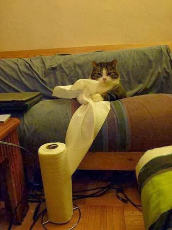 【猫画像】なにか?