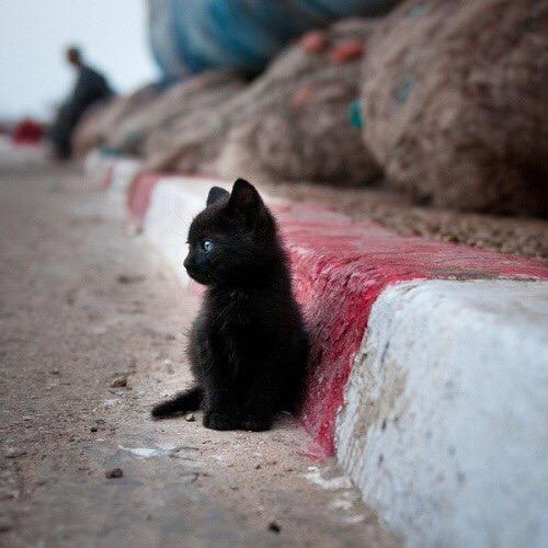 【猫画像】ポツン