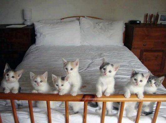 【猫画像】みんなでおはよう