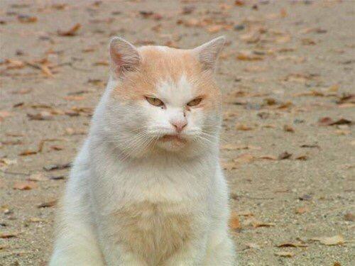 【猫画像】ケッ!