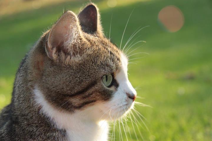 【猫のこと】いくつ知ってますか?猫のトリビア6選(猫動画)