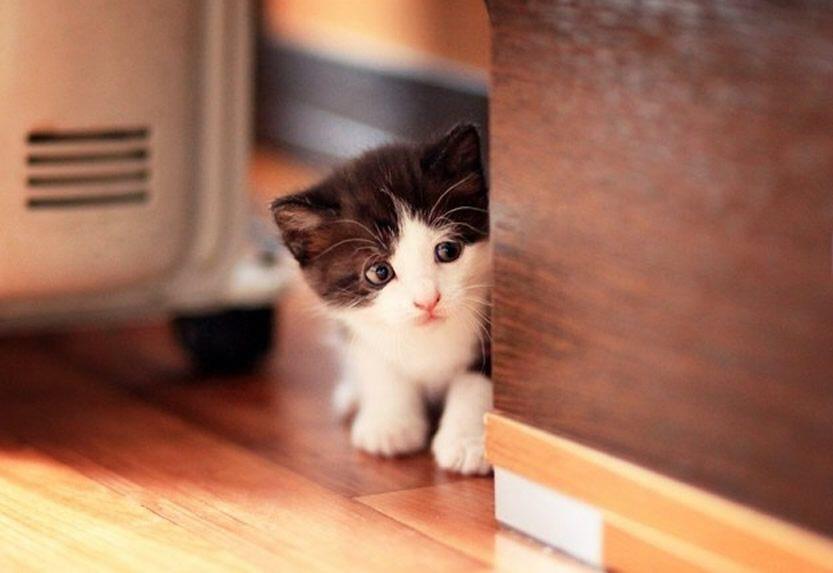 【猫画像】こっそりチラ見