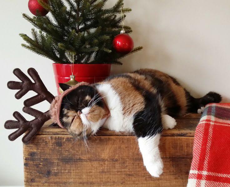 【猫画像】やっぱりかわいい!!クリスマスな猫画像 10選