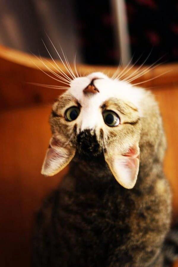 【猫画像】なに?