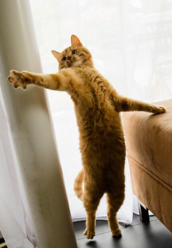 【猫画像】ちょっとそれ貸して〜!