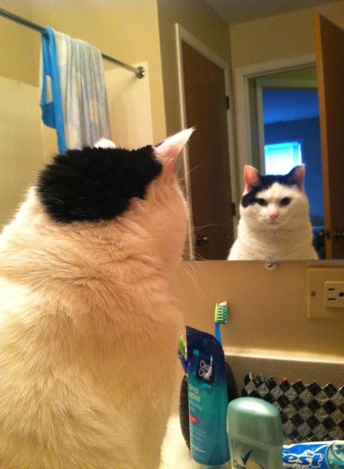 【猫画像】オレ、キマってる!