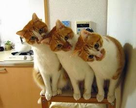 【猫画像】えっ、えっ、えっ