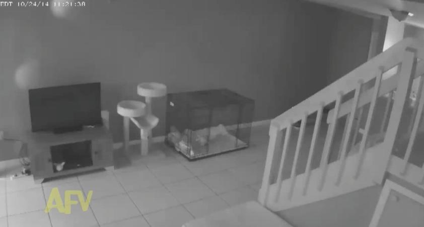 【猫動画】防犯カメラが捕らえた決定的瞬間!留守中、猫が衝撃的な行動を・・・