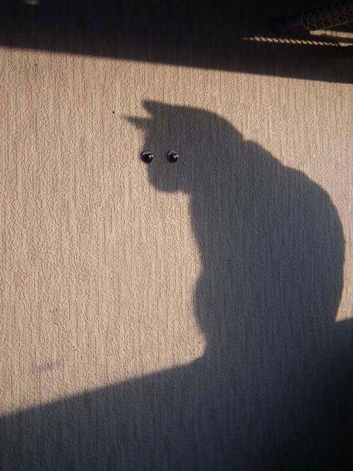 【猫画像】思わず二度見してしまう猫画像 パート10
