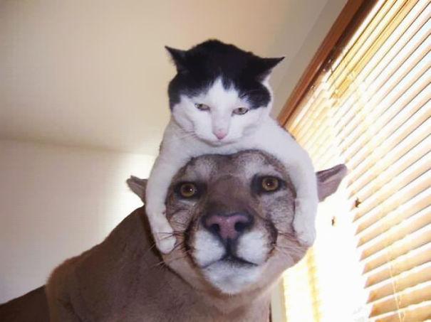 【猫画像】日本でも人気が出るか!?海外で話題のリアル猫帽子 12選