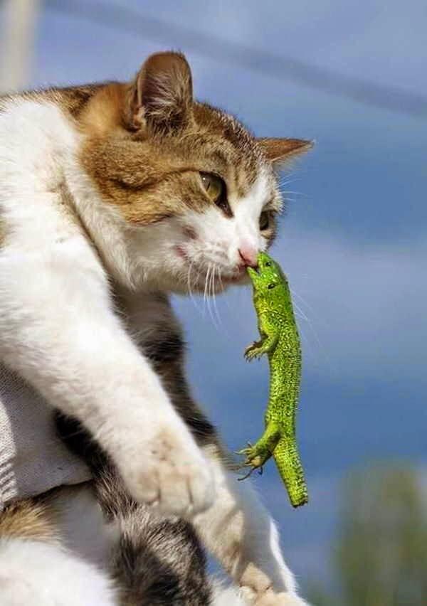 【猫画像】いてててっ