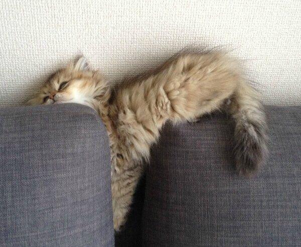 【猫画像】何でそうなった?