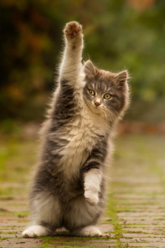 【猫画像】奥義!