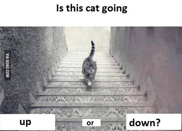 【猫ネタ】一体どっち??猫と階段の不思議な猫画像って・・・!?