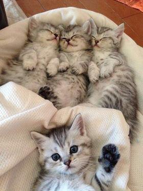 【猫画像】寝てる場合じゃない!