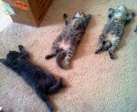 【猫画像】全滅 ・・・