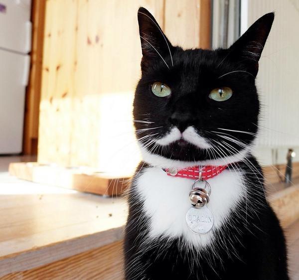 【猫画像】ねこ伯爵