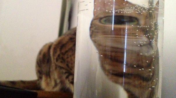 【猫画像】じんわりくる猫画像 パート1
