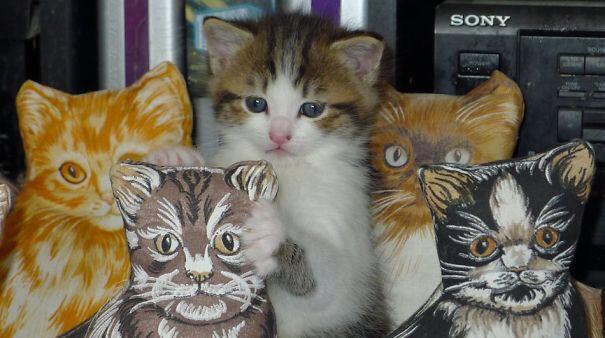 【猫画像】思わず二度見してしまう猫画像 パート11