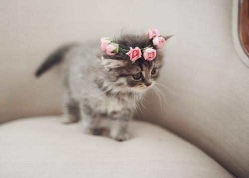 【猫画像】乙女