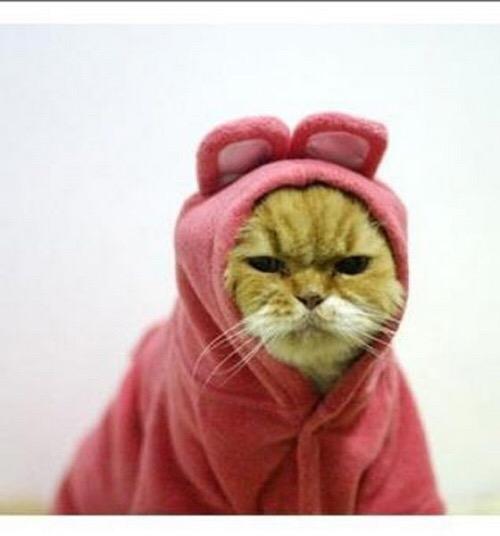 【猫画像】しぶしぶコスプレ