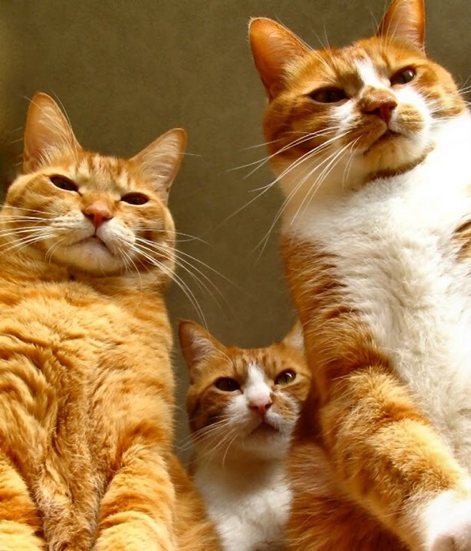 【猫画像】ヤバいヤツら!!