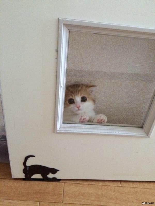 【猫画像】気付くとそこに・・・