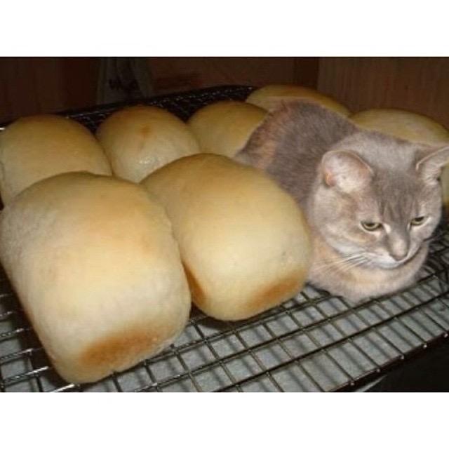 【猫画像】1斤、2斤・・・え!?