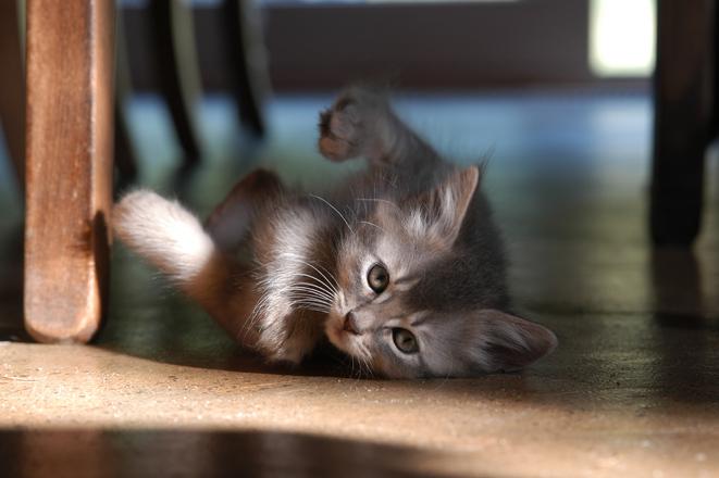 【猫ネタ】猫と住むとどうなる!?気になる飼い猫事情をデータで見ると・・・!?
