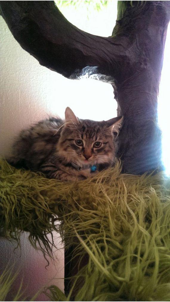 【猫ネタ】DIYで「猫の木」が!?日曜大工で驚きのキャットタワーを制作する方法とは・・・!?