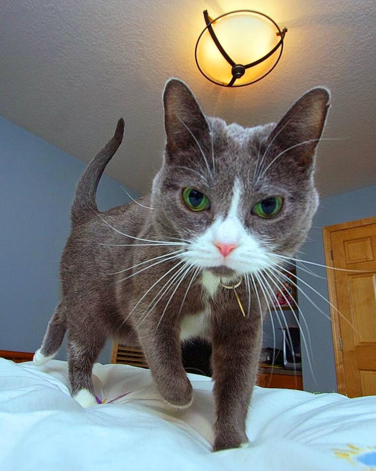 【猫画像】起きた時・・・