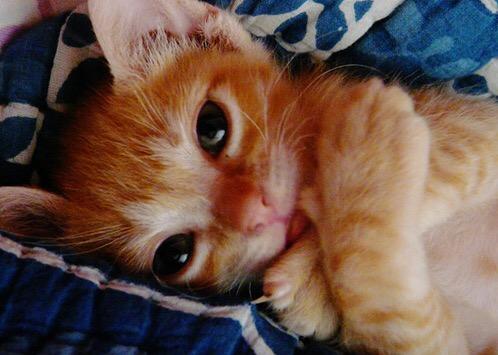 【猫画像】ギュッ