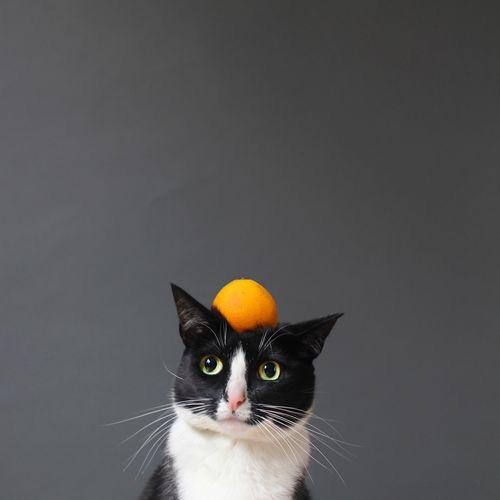【猫画像】猫とミカン?