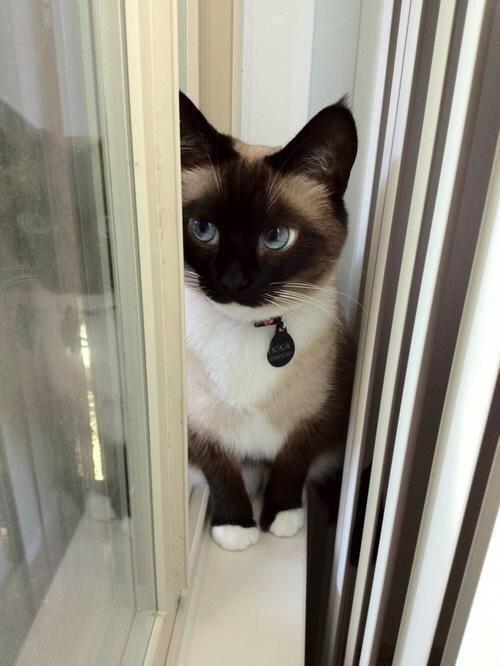 【猫画像】目ヂカラ