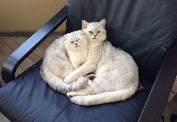 【猫画像】どっちがどっち??