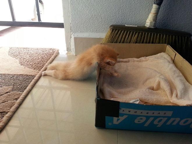 【猫画像】力尽きた・・・