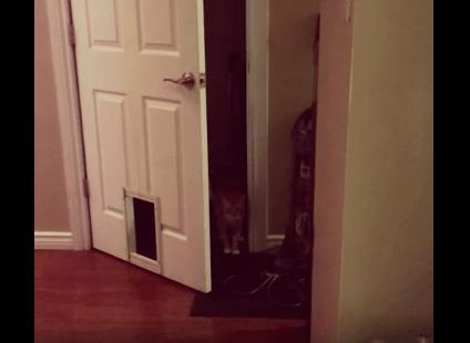 【猫動画】え、どういうこと!?猫用ドア前での理解不可能な猫の行動とは・・・
