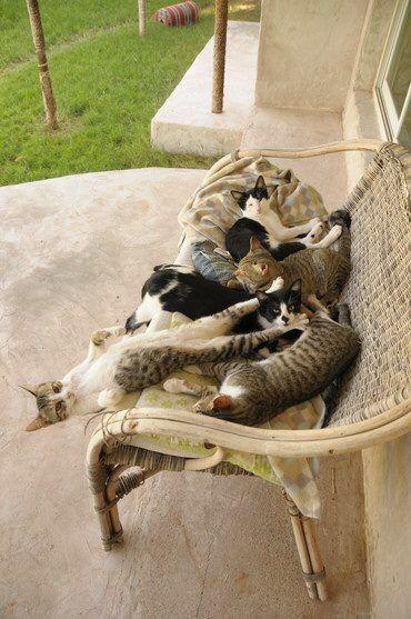 【猫画像】1匹だけポーズが変?