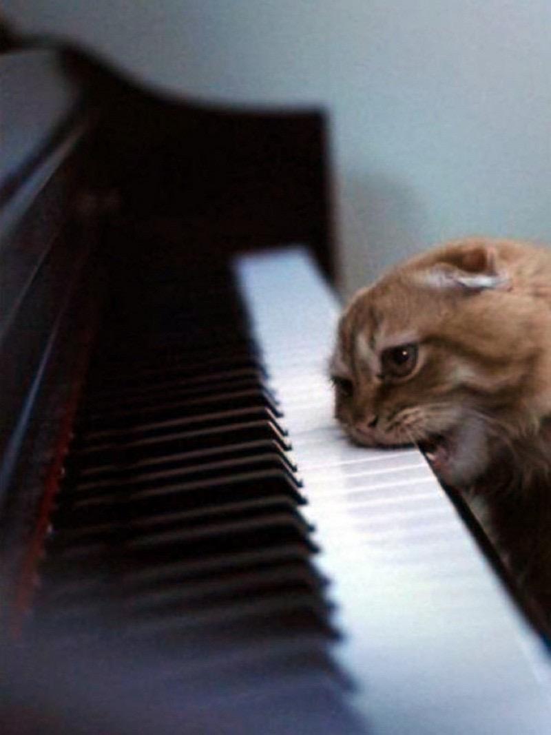 【猫画像】ピアノは食べもの