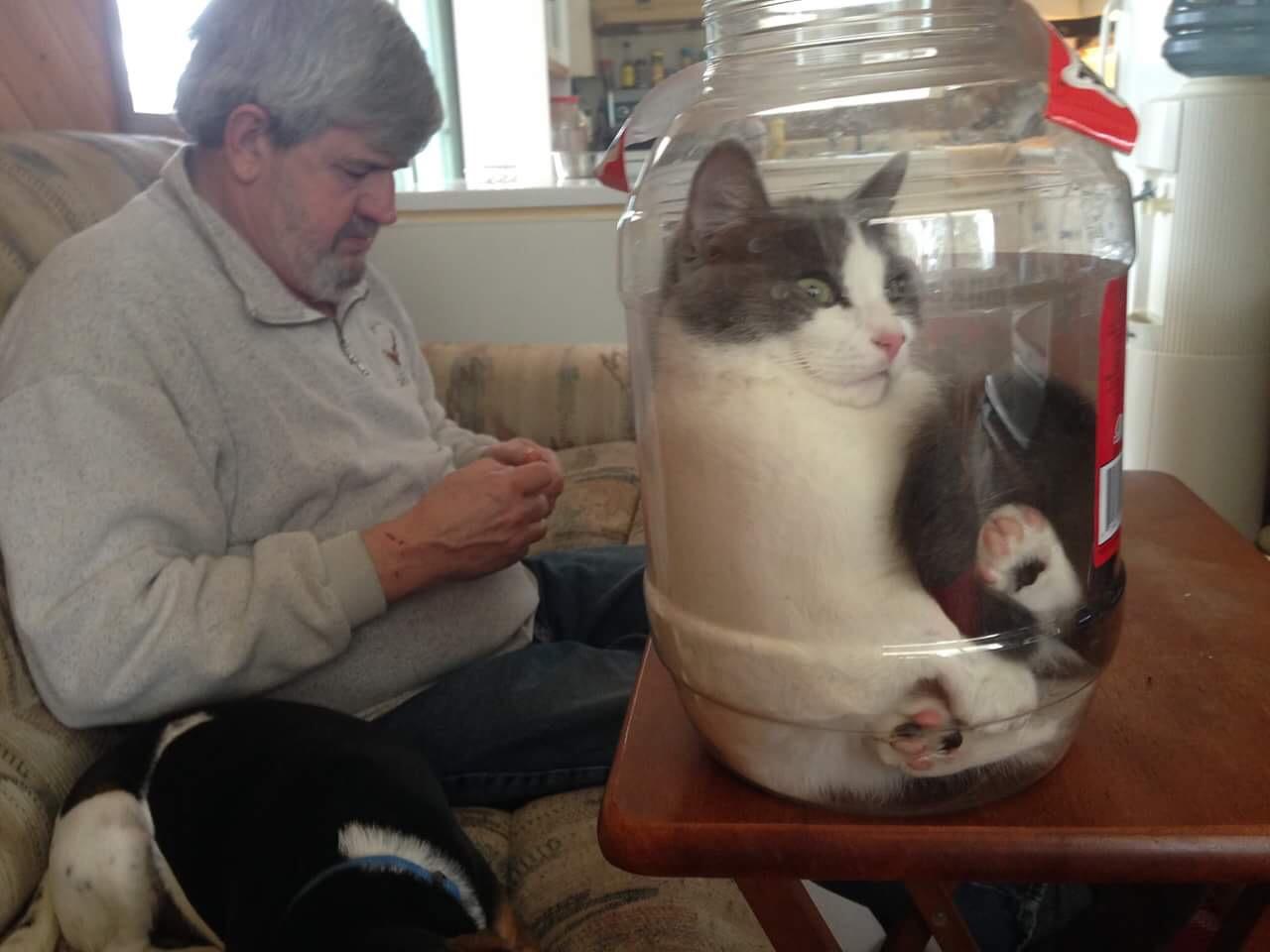 【猫画像】猫漬け