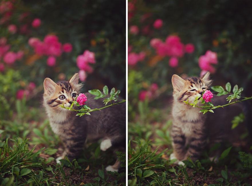 【猫画像】いい香り