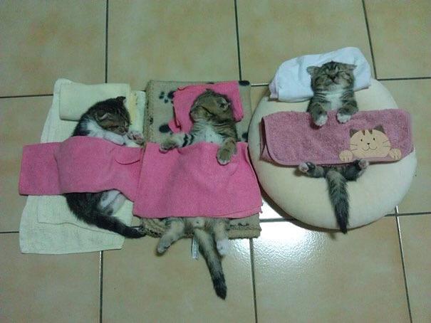 【猫画像】みんなで熟睡