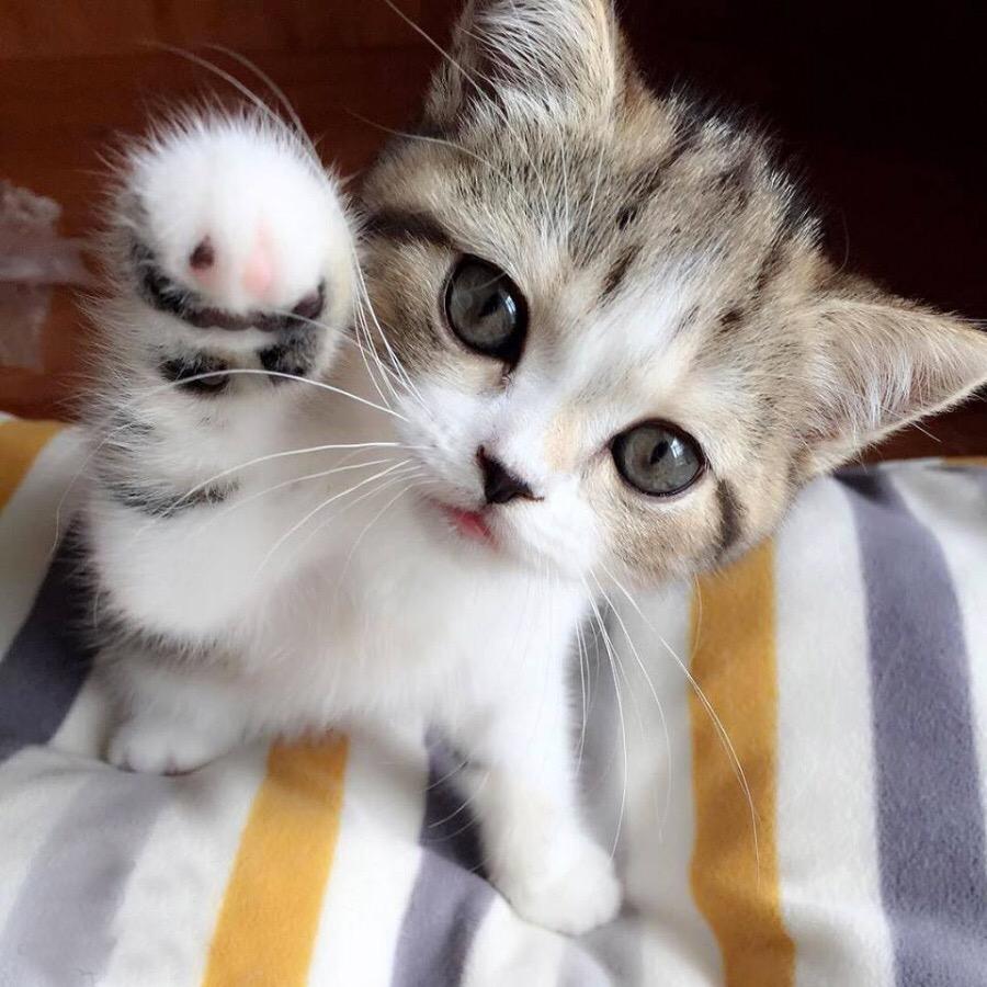 【猫画像】もしもし