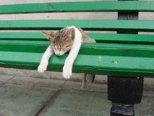 【猫画像】パタッ