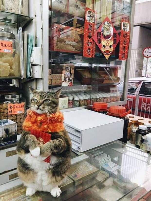 【猫画像】看板娘??