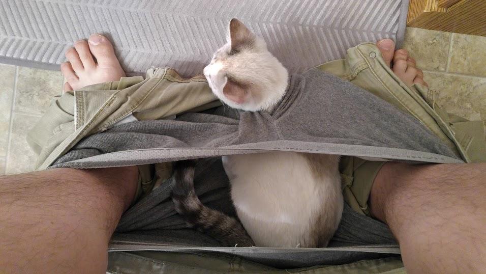 【猫画像】いやいやいや、そこじゃない!