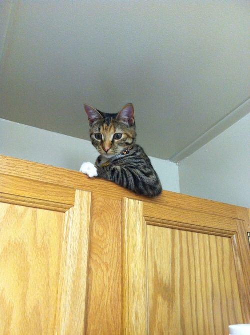 【猫画像】なにか用か?