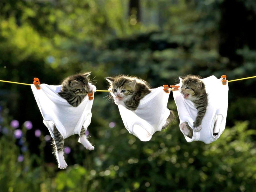 【猫画像】洗濯日和!