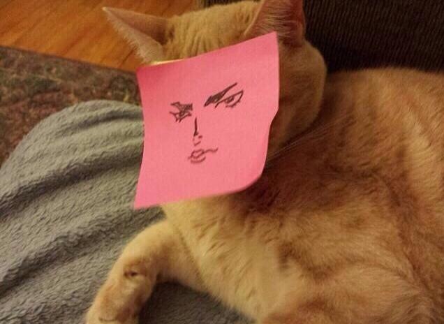 【猫画像】キリッ