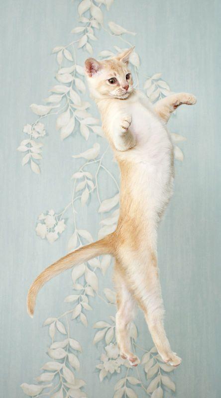 【猫画像】キレのある動き!